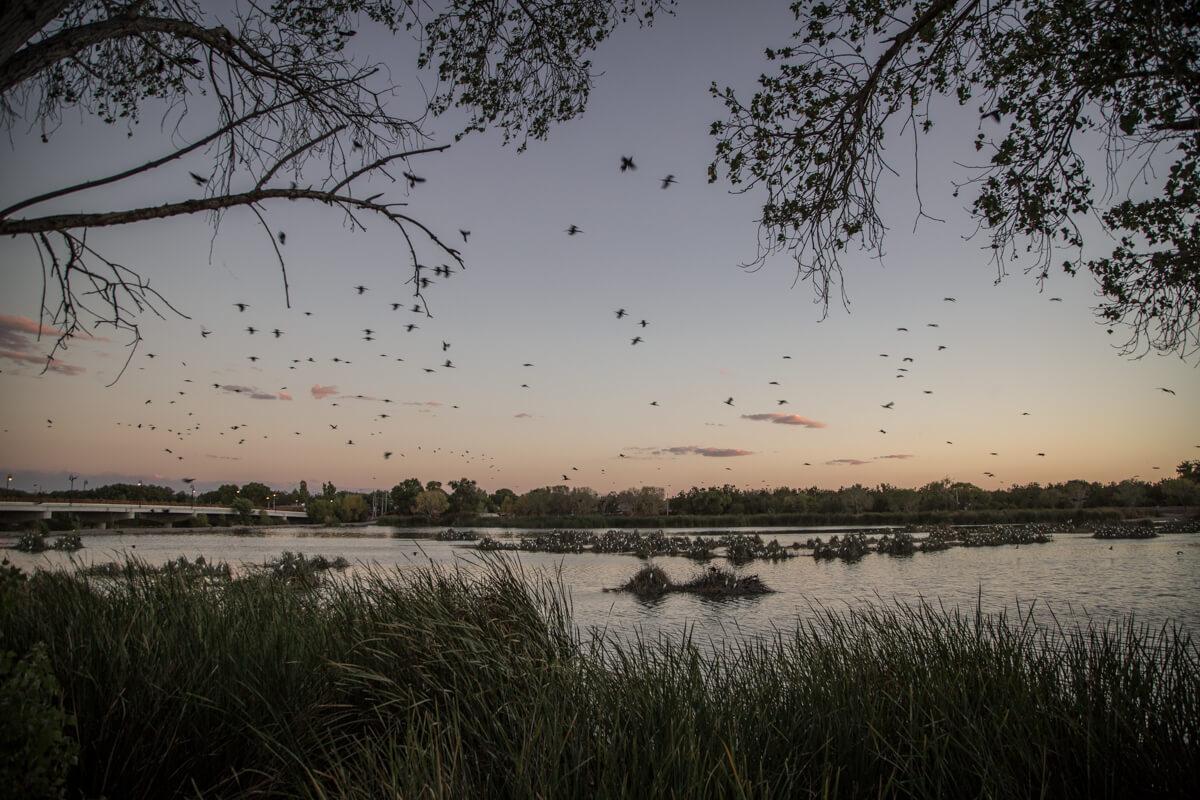 Dentro de la agenda de Agua para Todos está la defensa de humedales en Chihuahua, Chiapas y Xochimilco. En la imagen la laguna Meoqui en el Río San Pedro, Chihuahua. Foto: Heriberto Paredes